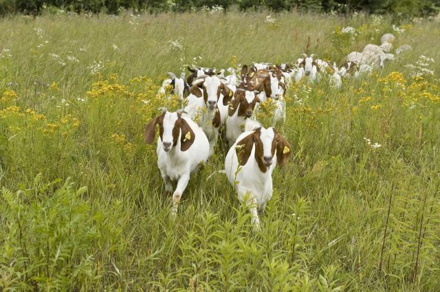 Kmetija Mali raj Koze