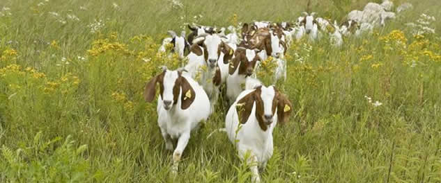 Kmetija Mali raj Ogled živali